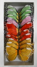 Schmetterlinge an Draht (12 Stück im Karton)